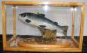 Image - salmon