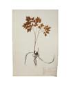 Image - herbier