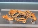 Image - ossements d'animaux